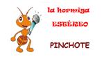 La hormiga estéreo Pinchote en vivo